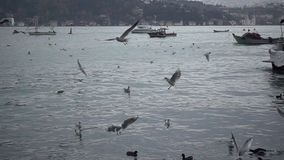 Mare e movimento lento dei gabbiani di volo stock footage