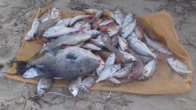 Mare e pesce Fotografie Stock