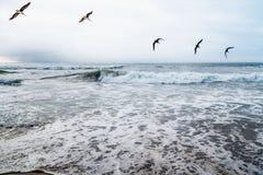 Mare e stormo drammatici degli uccelli di volo fotografia stock libera da diritti