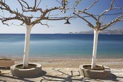 Mare ed alberi fotografia stock