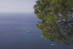 Mare ed albero Fotografie Stock Libere da Diritti