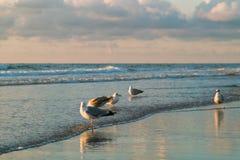 Mare ed i gabbiani Fotografia Stock Libera da Diritti