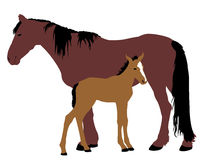 Mare with a foal. Brown mare with a foal Stock Image
