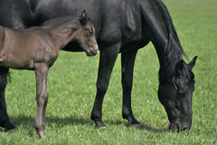 Mare & foal. Fauna & Flora > Animal > Farm Animal Stock Photos