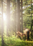Mare and foal in backlight. Mare and foal in the forest in backlight Royalty Free Stock Image