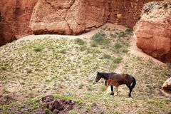 Mare and foal in canyon Royalty Free Stock Photos