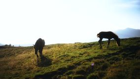 Mare and foal grazing in mountains. In late summer or early autumn at dawn stock video