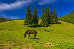 Mare and foal grazing in a sunny meadow Royalty Free Stock Photography