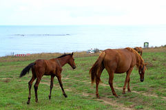 Mare and foal Royalty Free Stock Images