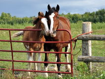 Mare and foal snuggle by gate Stock Photos