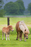 Mare with foal standing in a meadow Royalty Free Stock Photos