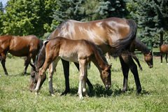 Mare and foal are together Royalty Free Stock Photos
