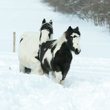 Mare with foal together in winter Royalty Free Stock Photography