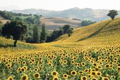 Mare giallo del paese immagini stock