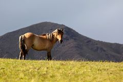 Mare grazes in the mountain Royalty Free Stock Photos