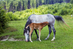 Mare and her young foal Stock Photos
