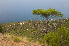 Mare, Mar Nero, turista, turismo, Crimea Fotografie Stock