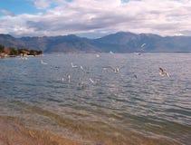 Mare-mews sul mare fotografie stock libere da diritti