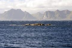 Mare in Norvegia del Nord Immagine Stock