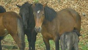 Mare nursing foal in woods