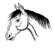 Mare. Painted horse head vector on white background stock illustration