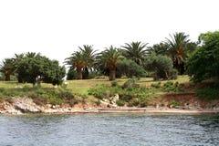 Mare, palma, spiaggia, isolamento Vista dal mare Immagini Stock Libere da Diritti