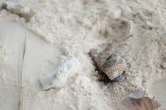 Mare Shell Alive Immagini Stock
