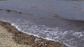 Mare sporco dopo una tempesta stock footage