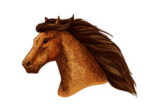 Mare or stallion head, mare with thick mane. Horse or stallion, mare head with thick mane. Domestic or farm broodmare sign or thoroughbred racehorse for Stock Image