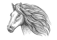 Mare or stallion young horse head sketch with mane Stock Images