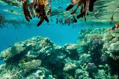 Mare subacqueo del paesaggio di vita in rosso immagini stock libere da diritti