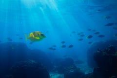Mare tropicale subacqueo fotografie stock libere da diritti