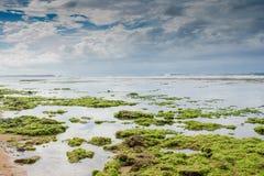 Marea bassa alla spiaggia Immagine Stock Libera da Diritti