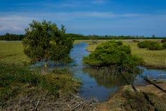 Marea de primavera en bosque del mangle Imagenes de archivo