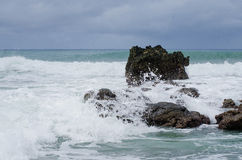 Marea dell'isola di orchidea forte fotografia stock