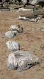 Marea inferior en Taquile Foto de archivo libre de regalías