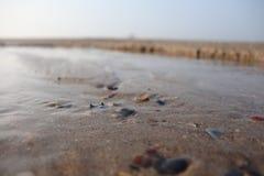 Marea y concha marina fotos de archivo
