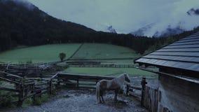 Marebbe, Val Badia, Italië: Ijslandse hengst, sneeuwweer stock videobeelden