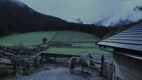 Marebbe, Val Badia, Italia: Semental islandés, tiempo nevoso almacen de metraje de vídeo