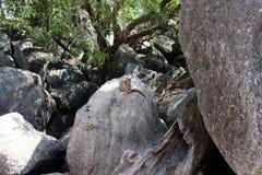 Mareeba wallaby i otaczający siedlisko fotografia stock