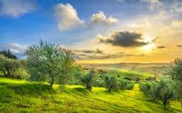 Maremma乡下全景和橄榄树在日落 卡萨莱马里蒂莫,比萨,托斯卡纳意大利 免版税库存图片