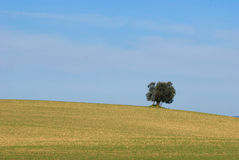 Maremma Stock Photo