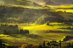 Maremma countryside, sunrise foggy landscape, vineyards and tree Stock Photo