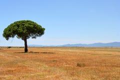 Maremma - la Toscana fotografie stock libere da diritti