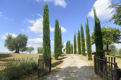 Maremma (Toscane, Italie) Photos libres de droits