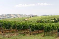 Maremma (Toscanië), wijngaard Stock Afbeeldingen
