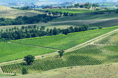 Maremma (Tuscany) Stock Photos