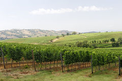 Maremma (Tuscany), vineyard Stock Images
