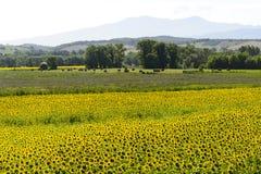 Maremma Tuscany, Włochy (,) obraz stock