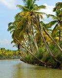 Mares au Kerala, Inde Images libres de droits